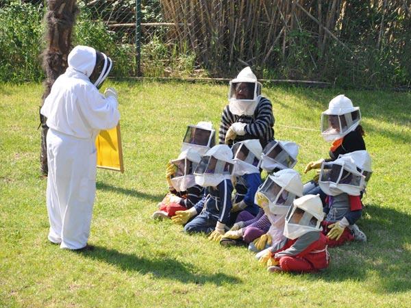 Les abelles i la mel