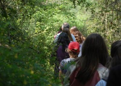 Descubramos el bosque