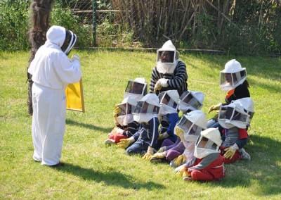 Las abejas y la miel